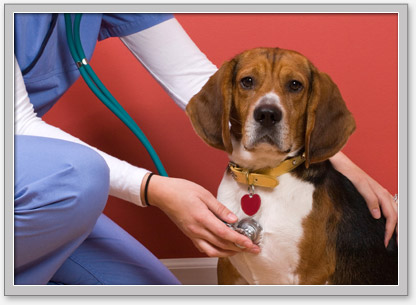 Low cost veterinary services, washington, oregon