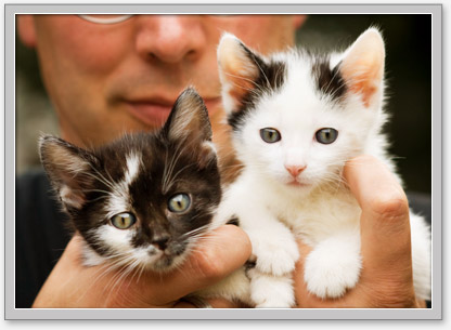 Low cost puppy and kitten health care